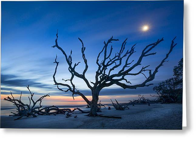 Tree Roots Art Greeting Cards - Moonshine Greeting Card by Debra and Dave Vanderlaan