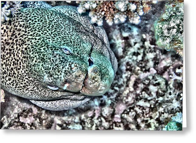 Undersea Photography Digital Art Greeting Cards - Moray eel Greeting Card by Roy Pedersen
