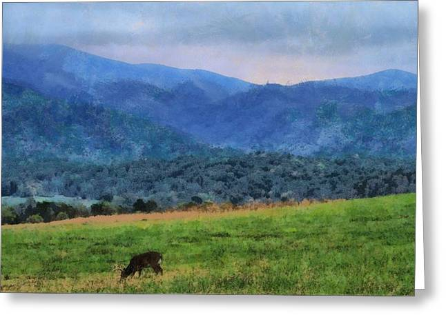 Haze Mixed Media Greeting Cards - Morning Deer In Cades Cove Greeting Card by Dan Sproul