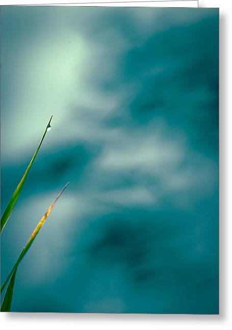Morning Dew Greeting Cards - Morning Dew  Greeting Card by Bob Orsillo