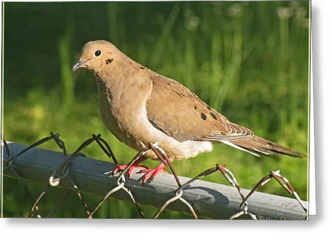 Debbie Portwood Greeting Cards - Morning Dove I Greeting Card by Debbie Portwood