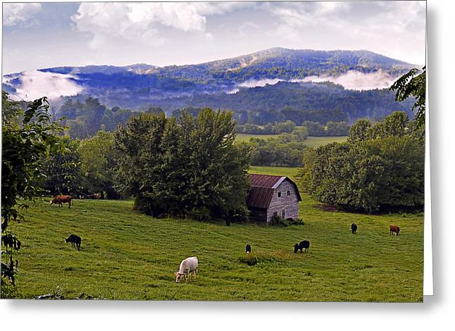 Morning Grazing Greeting Card by Susan Leggett