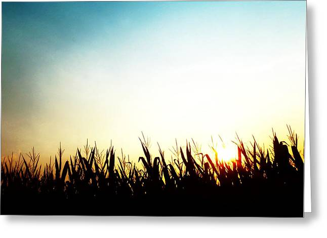 Cornfield Digital Art Greeting Cards - Morning Has Broken Greeting Card by Natasha Marco