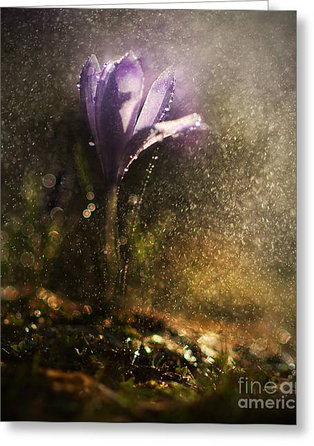 Pouring Greeting Cards - Morning impression Greeting Card by Jaroslaw Blaminsky