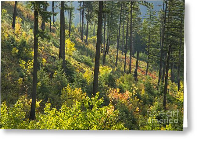 North Idaho Greeting Cards - Morning Light Greeting Card by Idaho Scenic Images Linda Lantzy