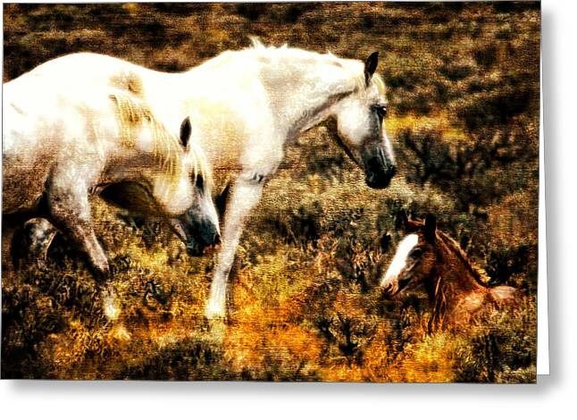 Western Western Art Greeting Cards - Morning Security Greeting Card by Robert Albrecht