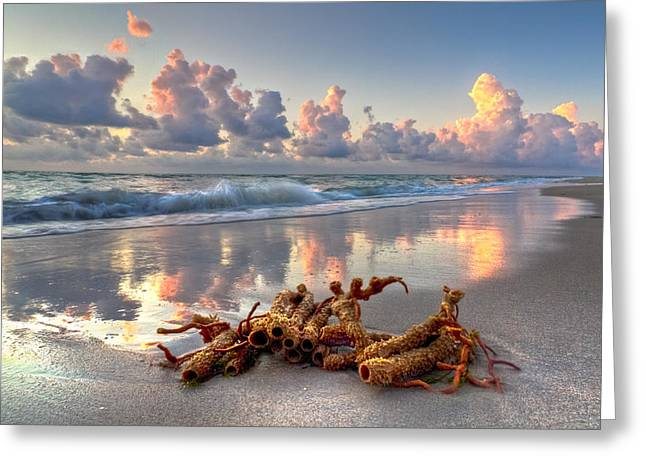 Boynton Greeting Cards - Morning Surf Greeting Card by Debra and Dave Vanderlaan