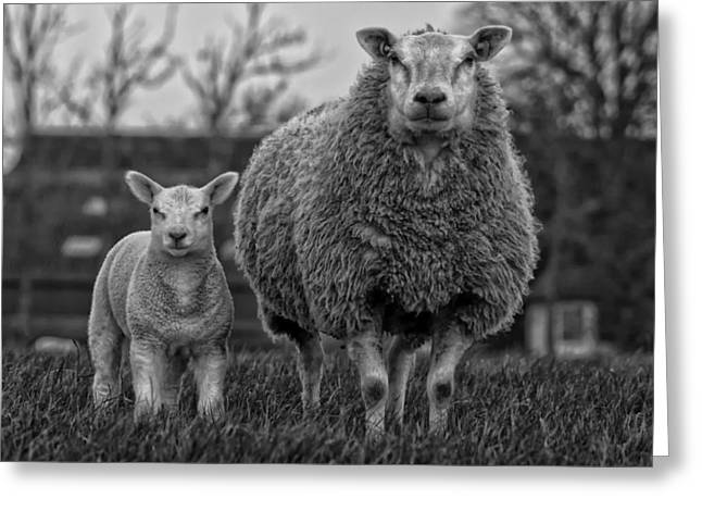 Country Woolies Greeting Cards - Mother and Child Greeting Card by Pixabay