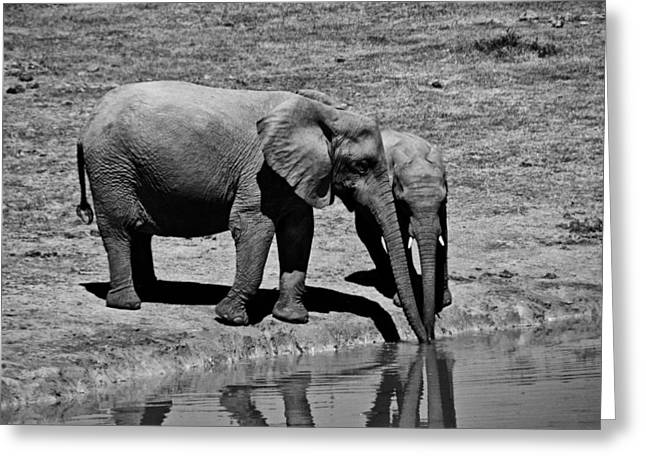 Elephant Drinking Greeting Cards - Mother Elephant and Baby at Watering Hole Greeting Card by Mountain Dreams