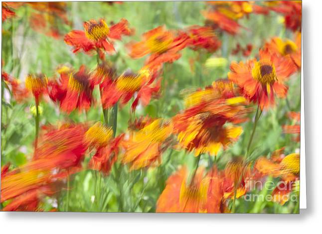 Helenium Autumnale Greeting Cards - Motion blur with common sneezeweed Greeting Card by Roberto Morgenthaler