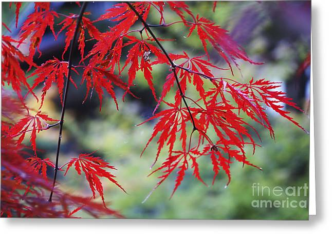 Fir Trees Greeting Cards - Mount Koya Koya San Japan  Greeting Card by Ruth Hofshi