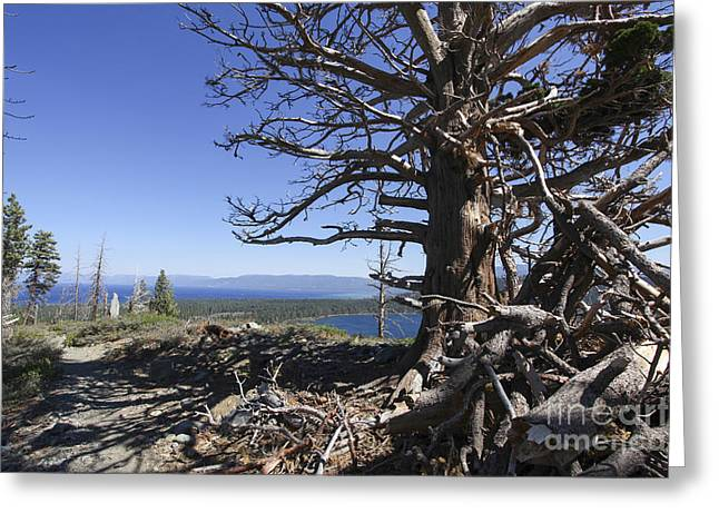Beat It Greeting Cards - Mount Tallac trailhead  Greeting Card by Gal Eitan