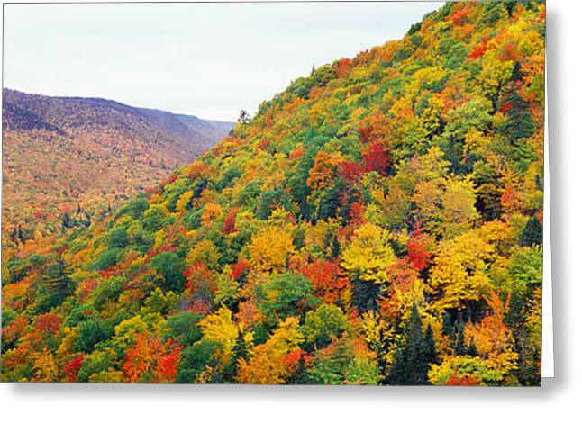 Nova Scotia Greeting Cards - Mountain Forest In Autumn, Nova Scotia Greeting Card by Panoramic Images
