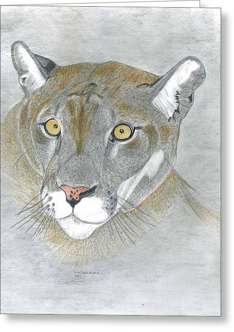 Wild Life Drawings Greeting Cards - Mountain Lion Greeting Card by Don  Gallacher