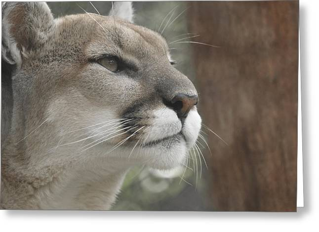 Mountain Lion Greeting Card by Ernie Echols