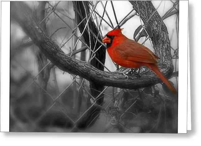 Biological Digital Art Greeting Cards - Mr. Cardinal Greeting Card by Sandra Clark