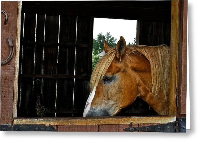 Belmont Stakes Greeting Cards - Mr Ed Greeting Card by Frozen in Time Fine Art Photography