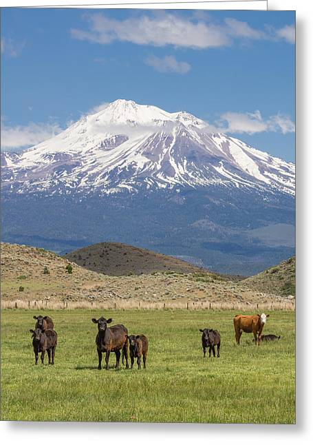 Best Sellers -  - Pastureland Greeting Cards - Mt Shasta cattle ranch Greeting Card by John Trax