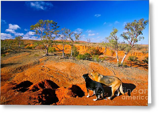 Kelpie Photographs Greeting Cards - Mundi Mundi Plain wash away  Greeting Card by Bill  Robinson