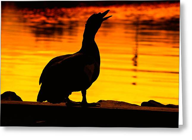Muscovy Greeting Cards - Muscovy Sunset Greeting Card by Rich Leighton