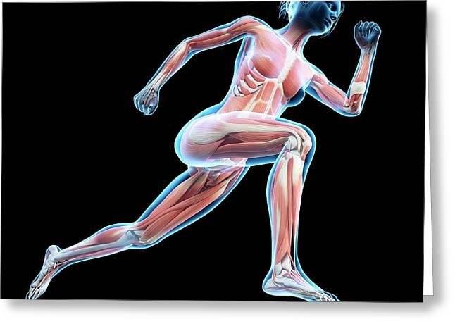Muscular System Of Jogger Greeting Card by Sebastian Kaulitzki