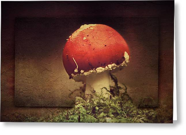 Forest Floor Mixed Media Greeting Cards - Mushroom Greeting Card by Heike Hultsch