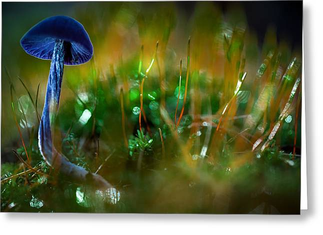 Purple Mushrooms Greeting Cards - Mushroom magic Greeting Card by Dirk Ercken