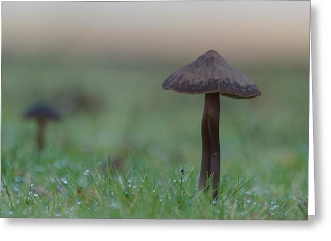 Fungi Greeting Cards - Mushrooms Greeting Card by Angie Vogel