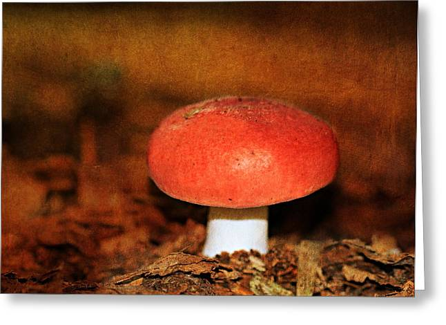Forest Floor Greeting Cards - Mushrooms Greeting Card by Heike Hultsch