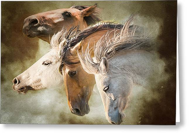 Photoart Greeting Cards - Mustang Run Greeting Card by Ron  McGinnis