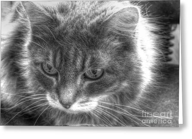 Cats Pyrography Greeting Cards - My cat Greeting Card by Yury Bashkin