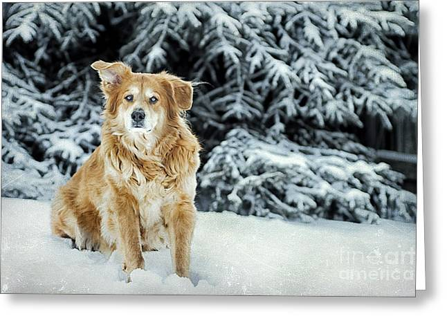 Alone Digital Art Greeting Cards - My Girl Greeting Card by Darren Fisher