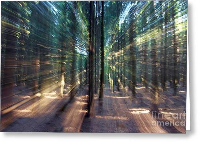 Blured Greeting Cards - Mysterious Forest Greeting Card by Michal Boubin