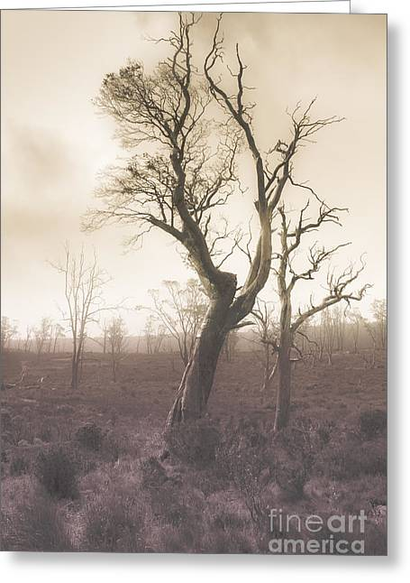 Mystery Tree In A Dark Scary Forest Greeting Card by Jorgo Photography - Wall Art Gallery