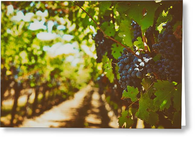 California Vineyard Greeting Cards - Napa Valley Bounty Greeting Card by Mountain Dreams