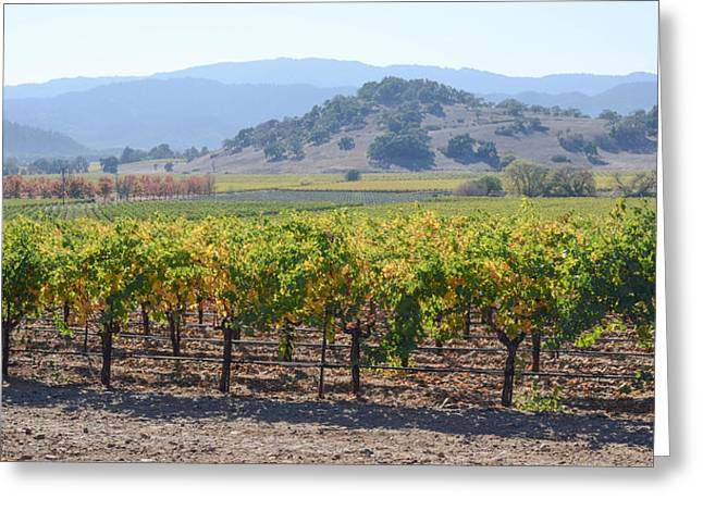 Cabernet Sauvignon Greeting Cards - Napa Valley California Vineyard in Fall Autumn Greeting Card by Brandon Bourdages
