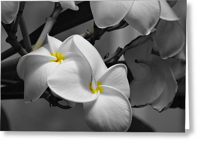 Environmental Science Greeting Cards - Natural Beauty Greeting Card by Dan Sproul