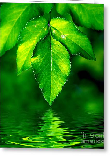 Green Leaves Greeting Cards - Natural leaves background Greeting Card by Michal Bednarek