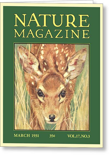 Lithography Greeting Cards - Nature Magazine Greeting Card by Gary Grayson