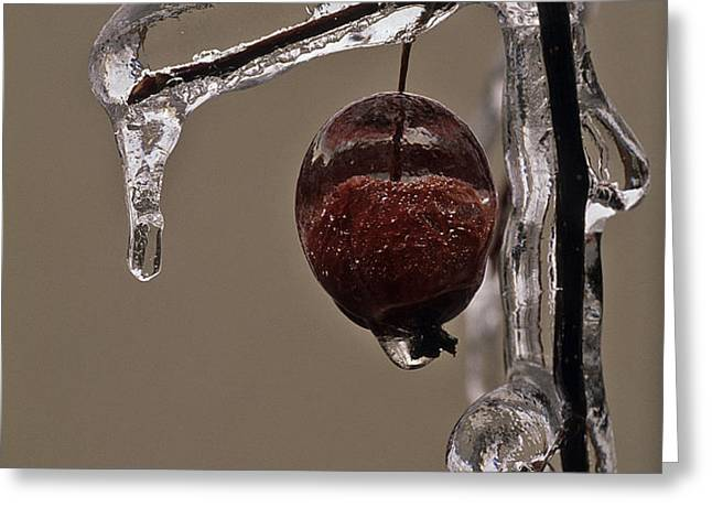 Nature's Candy Apple Greeting Card by Tony Beck