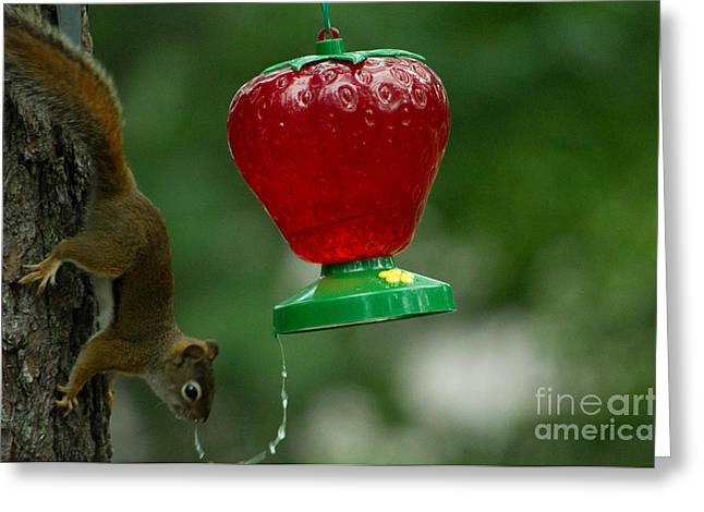 Feeder Framed Prints Greeting Cards - Stop thief Greeting Card by Emmanuel Haratsaris