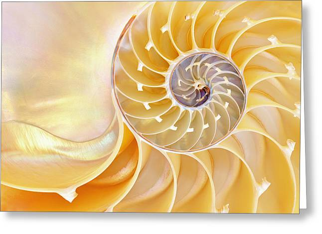 Shell Pattern Greeting Cards - Nautilus Shell Greeting Card by Dean Pennala