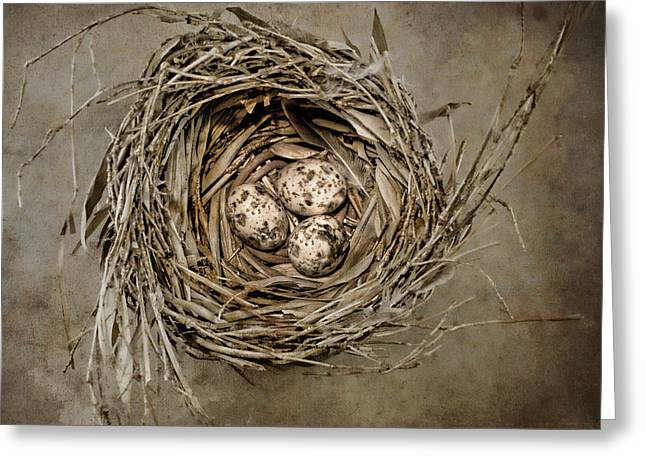 Secure Greeting Cards - Nest Eggs Greeting Card by Carol Leigh