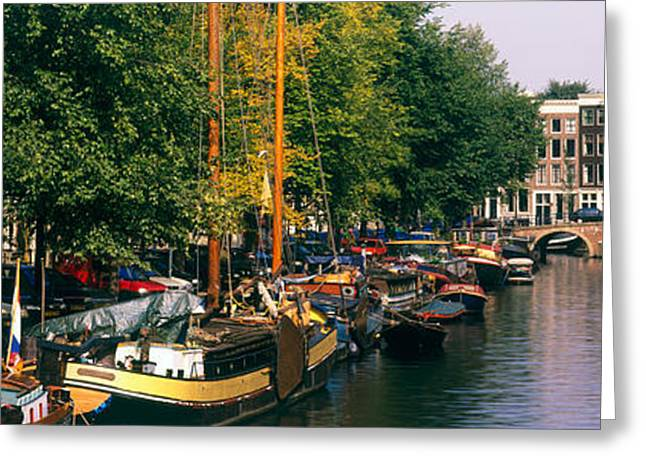 Tree Lines Greeting Cards - Netherlands, Amsterdam Greeting Card by Panoramic Images