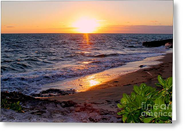 Sunrise. Water Greeting Cards - New Day Greeting Card by Carey Chen