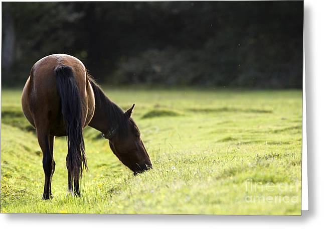 New Forest Pony Greeting Cards - New Forest  Greeting Card by Angel  Tarantella