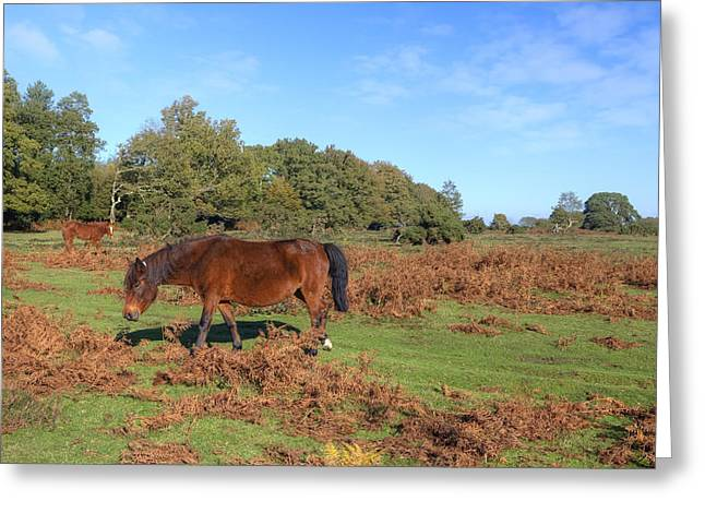 Heathland Greeting Cards - New Forest Greeting Card by Joana Kruse
