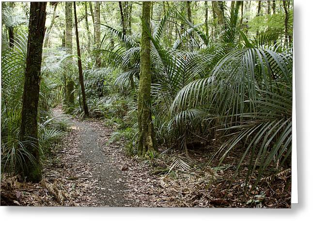 Tropical Photographs Greeting Cards - New Zealand forest Greeting Card by Les Cunliffe