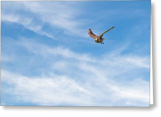 Raptor In Flight Greeting Cards - Nice Flying Weather Greeting Card by Bill  Wakeley
