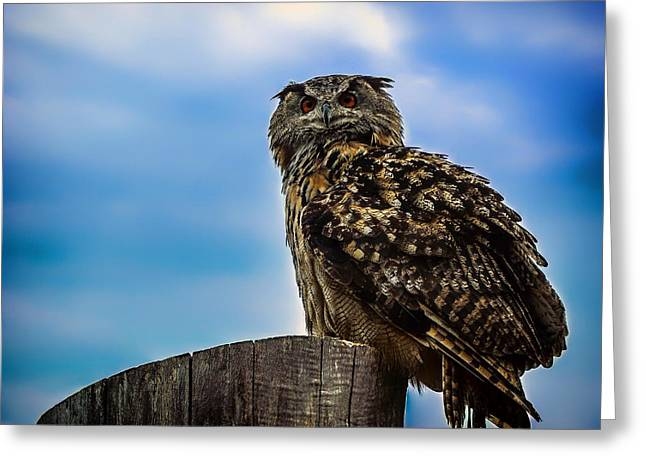 Lovely Owl Greeting Cards - Night Eyes Greeting Card by Mountain Dreams